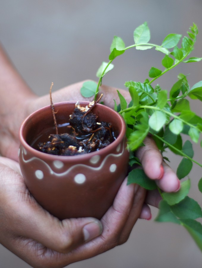 Perennial Essences of an Indian bowl